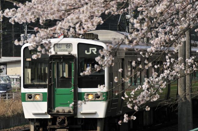 宮城の桜_2.jpg