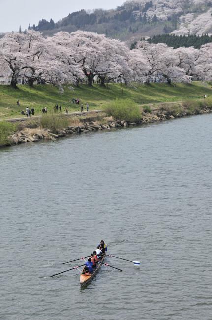 桜iroiro_9.jpg