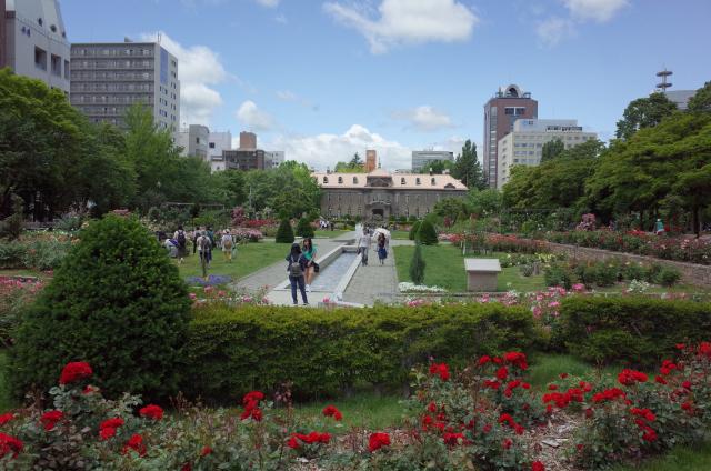 大通り公園のバラ.jpg